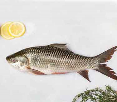 Fresh Rohu Fish (Cleaned & Pieces) - 4-5 Kgs Size