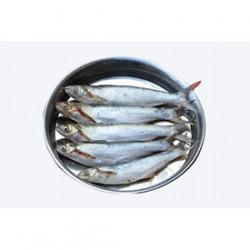 Fresh Bacha Fish - 1 Kg