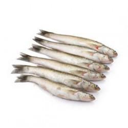 Fresh Bata Fish - 1 Kg