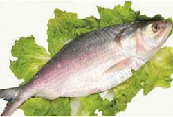 Fresh Hilsa Fish - 500 Grm (Subject to Availability)